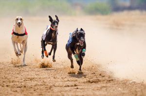 Minister of State Andrew Doyle TD presents the Greyhound Racing Bill 2018 before Government